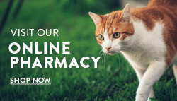 Visit Our Online Pharmacy Button
