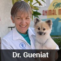 The veterinarian Dr. Gueniat with a small fluffy dog