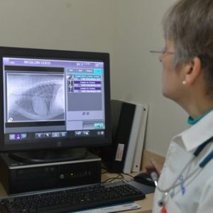The veterinarian looking at an x-ray on a computer
