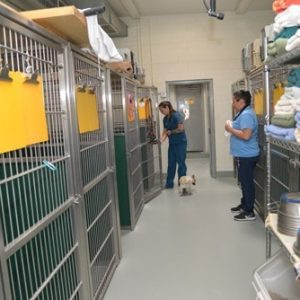 Two team members in the dog kennels boarding area